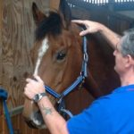 tony and horse