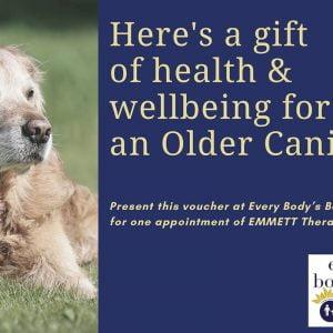 Older Canine